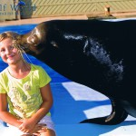 Gulf World Shows Thrill and Delight All Ages