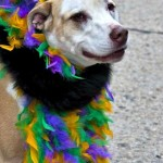 Northwest Florida Celebrates Mardi Gras