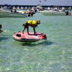 Crab Island: Submerged Sandbar Is Destin Hot Spot