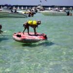 Crab Island: Submerged Sandbar Is Destin Hot Spot