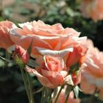 Bellingrath Gardens Is Well Worth the Trip