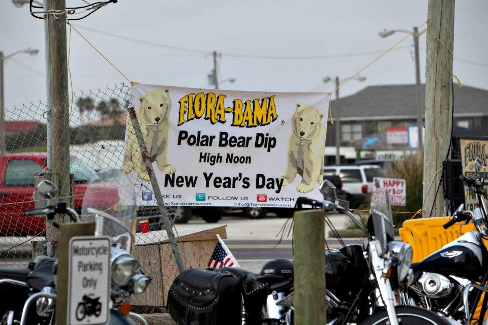 polar bear dip sign