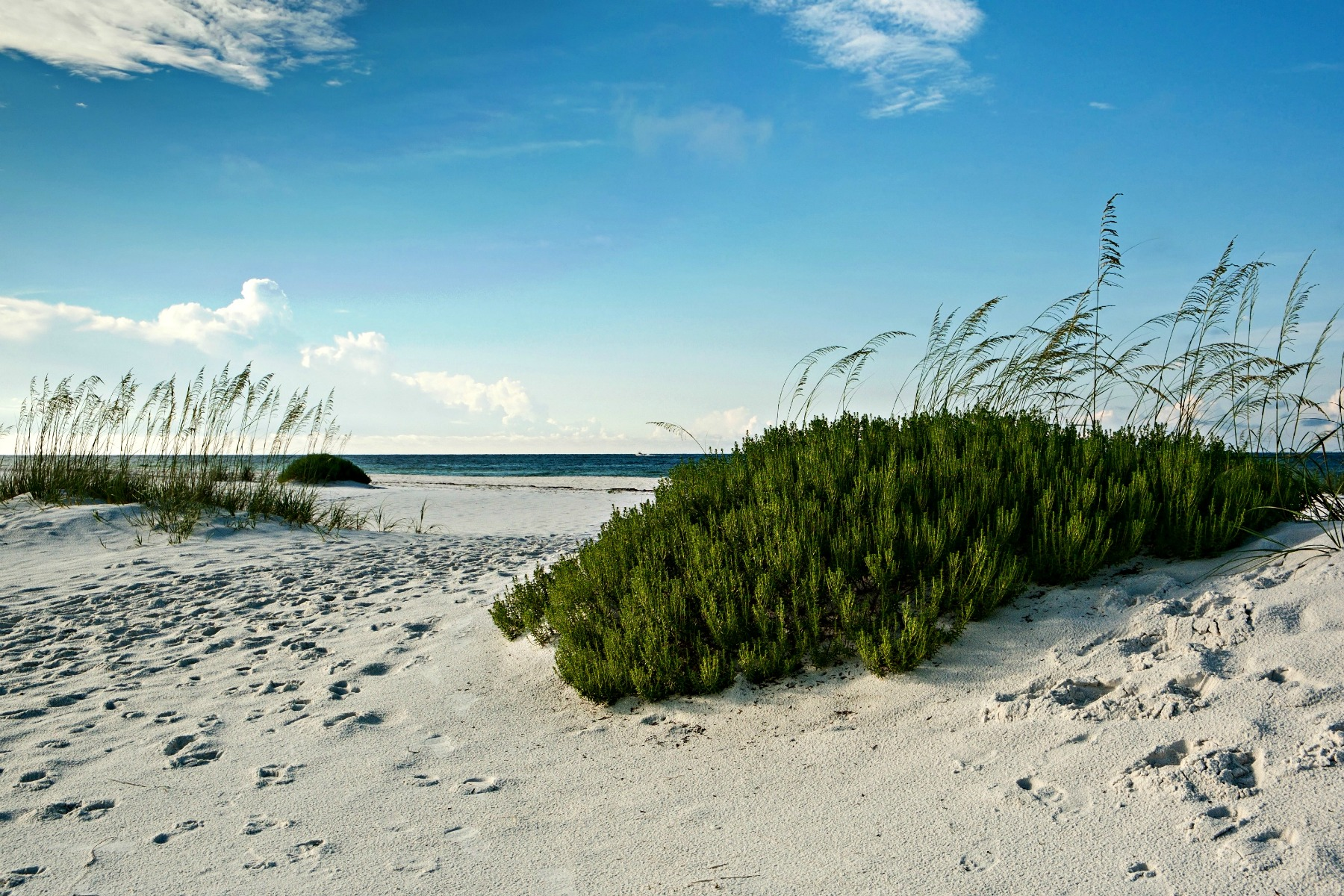 sand dunes, rosemary, and sea oats at the Gulf Coast in Northwest Florida