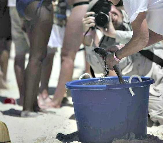 Flora-Bama Mullet Toss worker talking mullet out of a blue bucket