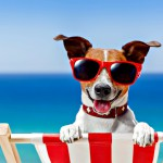 These Dog-Friendly Beaches Welcome Your Furry Friends