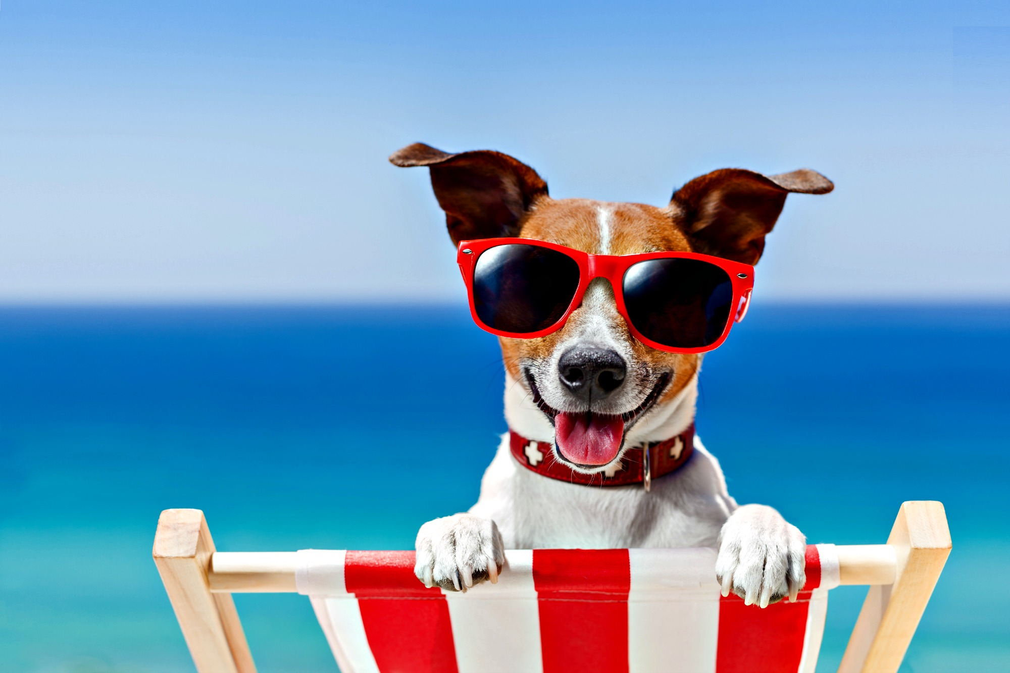 Dog in sunglasses sitting on a beach chair at a dog-friendly beach