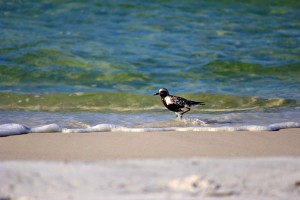 View of wet sand and surf with plover walking through the water