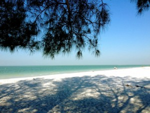 Pine-shaded spot on white-sand beach at Fort De Soto State Park near Clearwater, Florida.