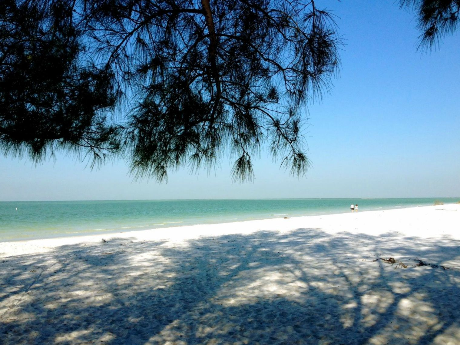 Pine-shaded spot on white-sand beach at Fort De Soto State Park near Clearwater, Florida