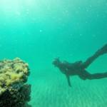 Discover Underwater Wonders at Navarre Beach Diving Reefs