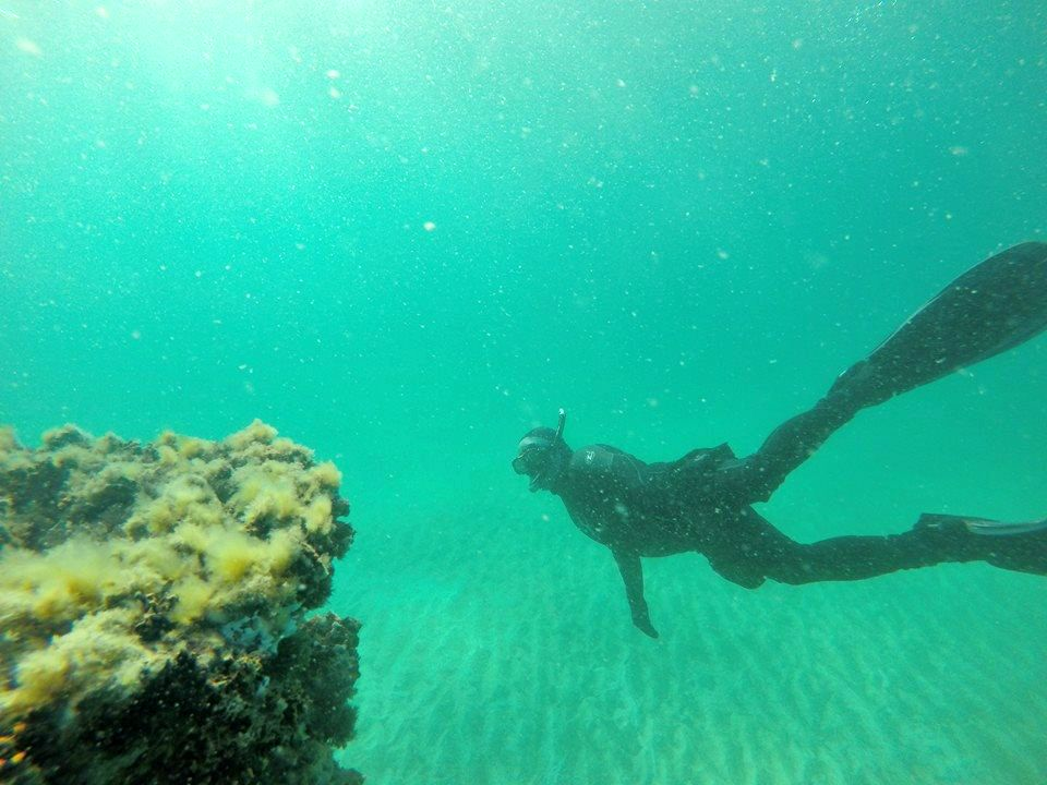Diver exploring the artificial reef in the Gulf off the coast of Navarre Beach