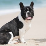 Plan-Ahead Tips for Taking Your Dog to the Beach