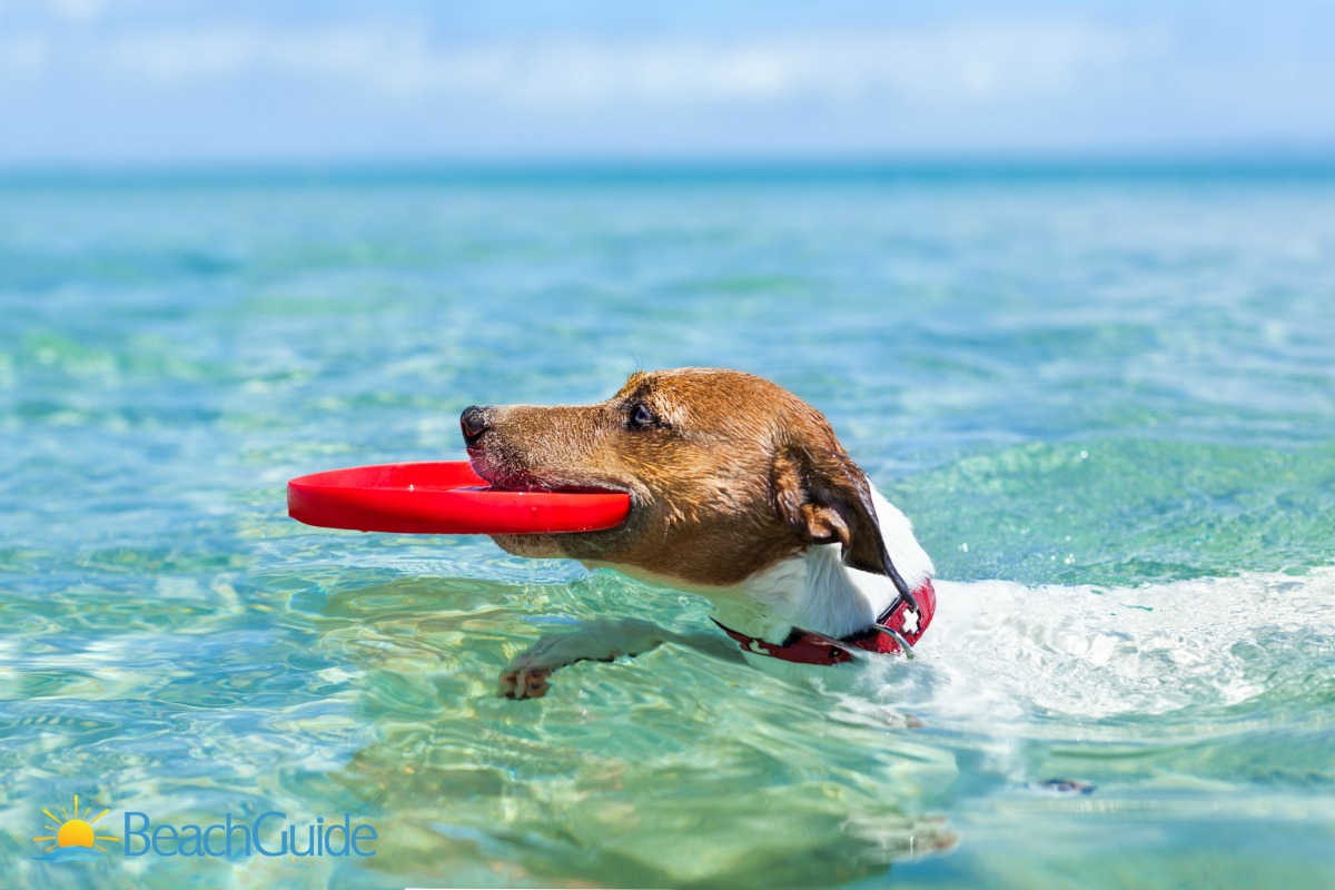 Taking your dog to the beach requires a little planning to avoid sunburn and dehydration