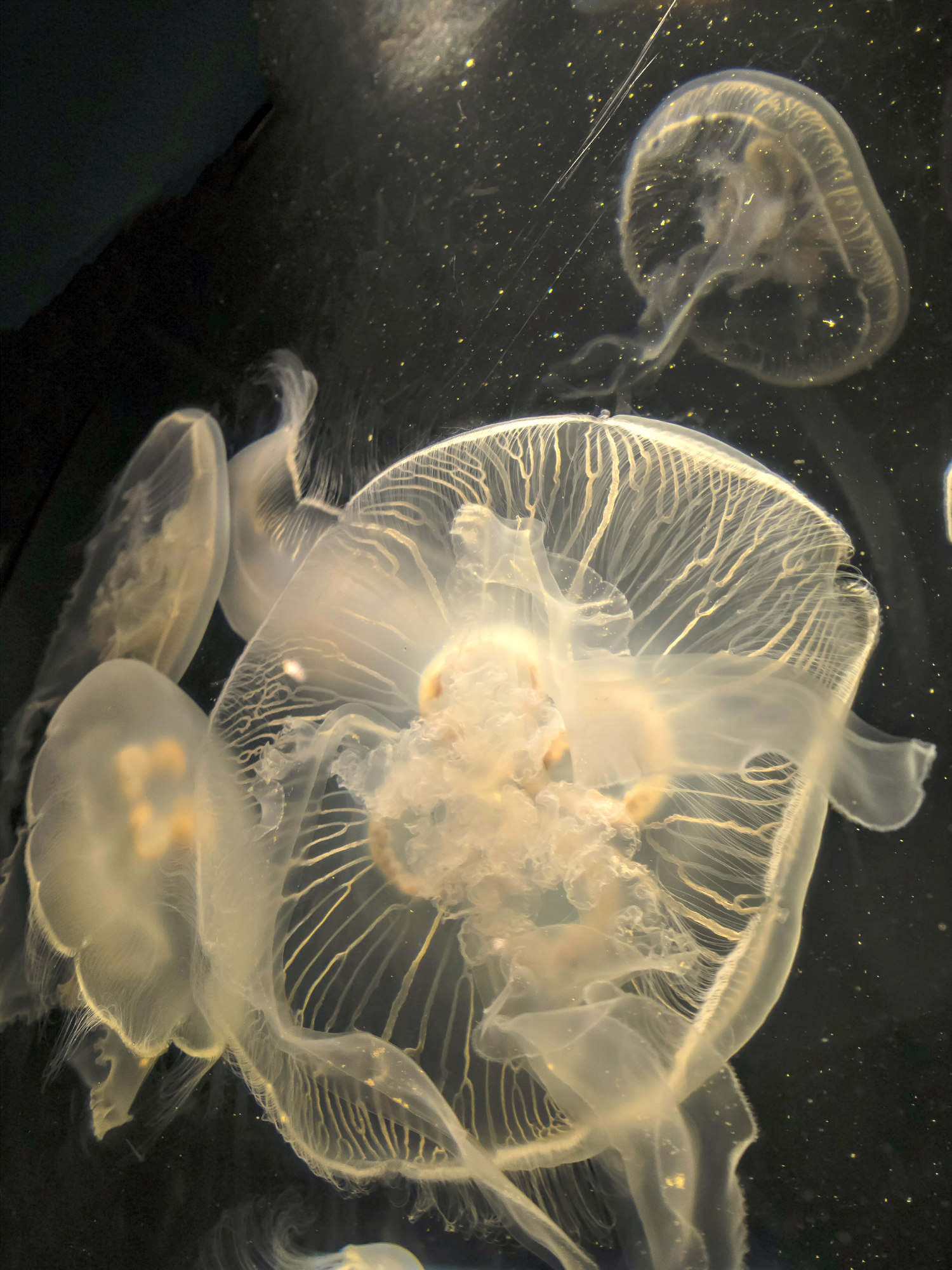 Jellyfish Facts: Safety Tips, Sting First Aid, and Fun Things To Know