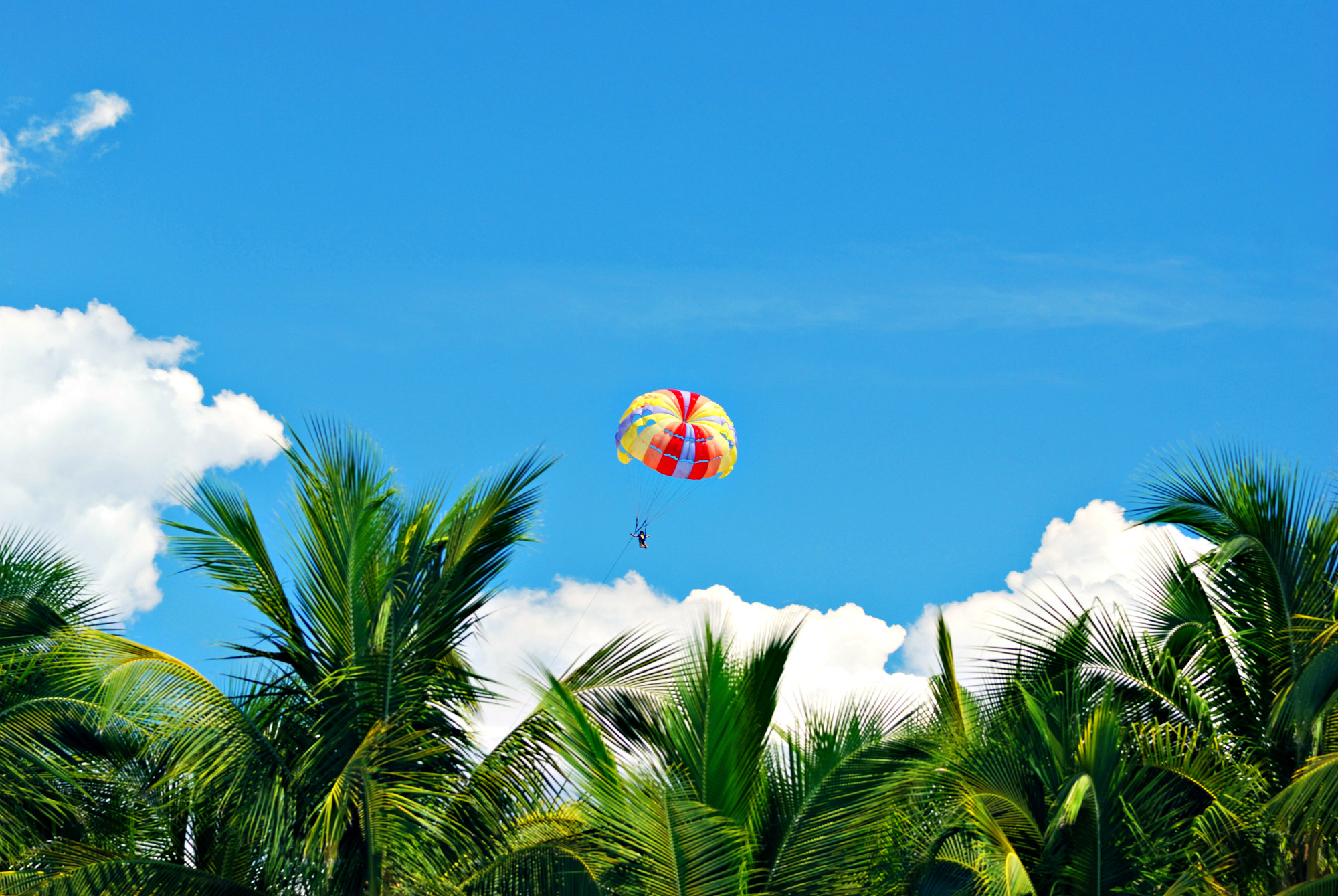 Parasailing through a bright-blue sky over a grove of leafy palm trees