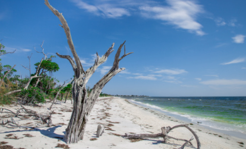 Accessible only by boat, Cayo Costa Island is home to some of the best secluded beaches on the Gulf Coast.