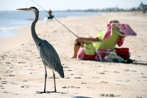 One of the best secluded beaches in Florida, St George Island is a fisherman's haven.